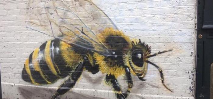 Een bijenplan voor stad Genk